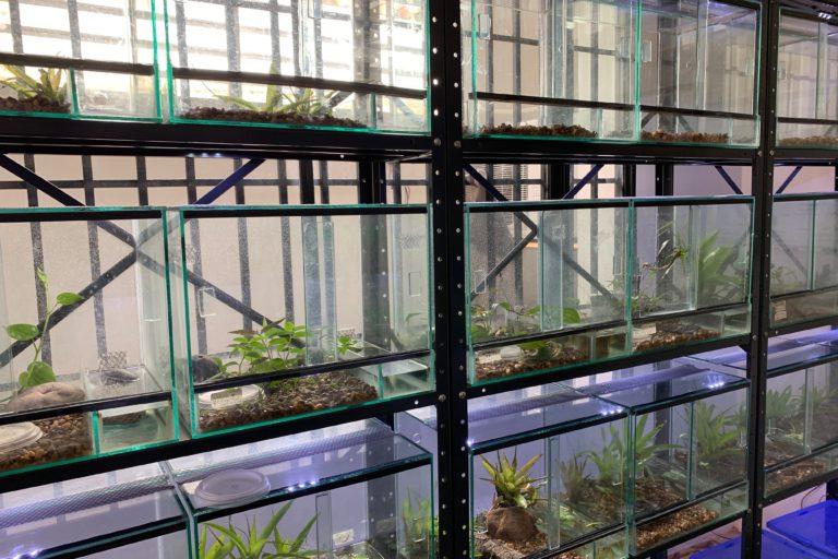 El Centro de Conservación REVA mantiene en total siete especies de anfibios. Foto: Enrique La Marca.
