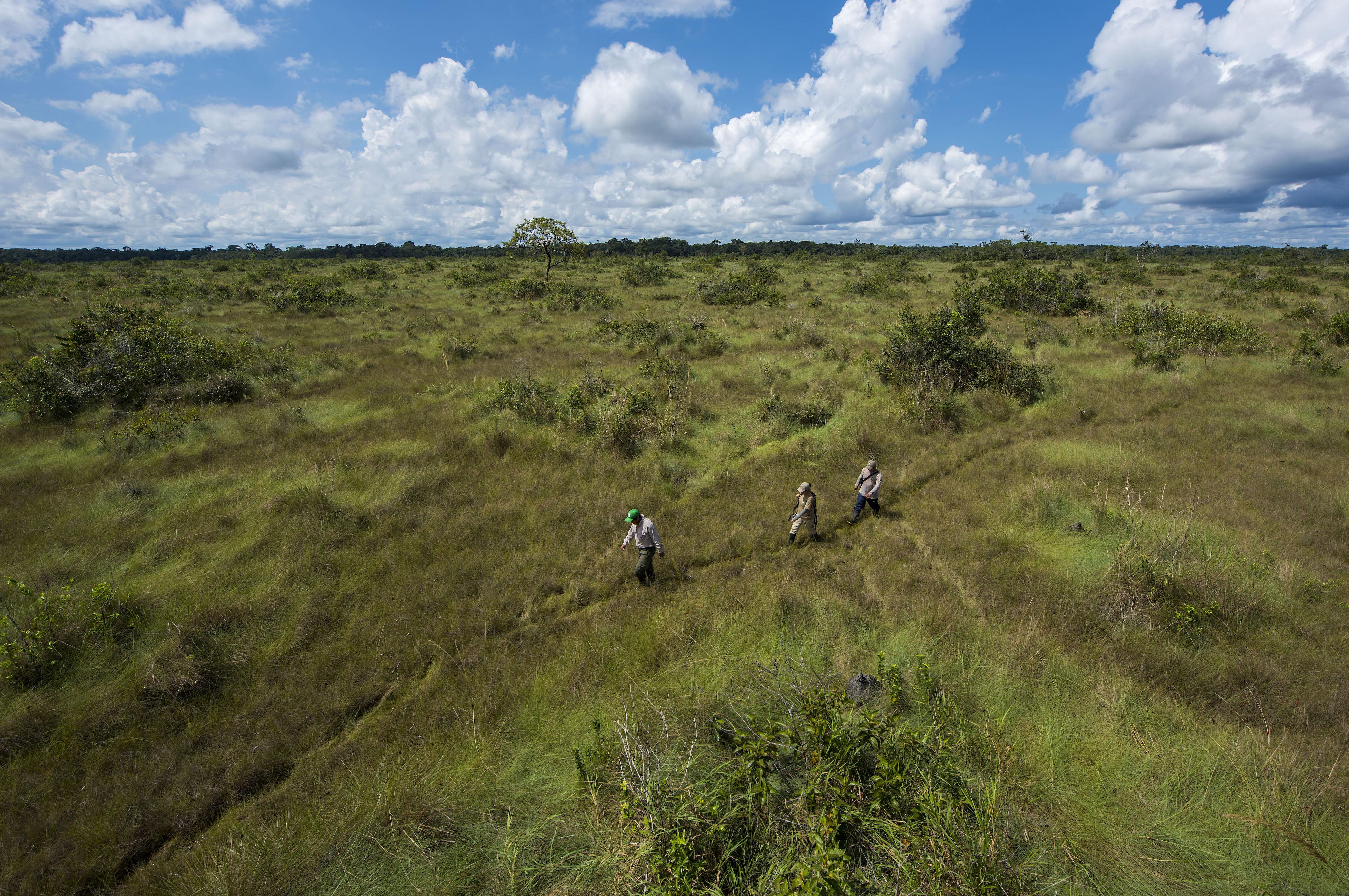 Un equipo de monitoreo recorre las Pampas del Heath en el Parque Nacional Bahuaja Sonene. Foto: © Daniel Rosengren / FZS Perú.