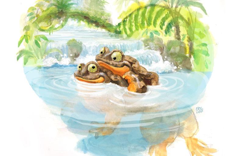 Romeo y Julieta viven ahora juntos en el acuario del macho. Ilustracion: Eric Losh.