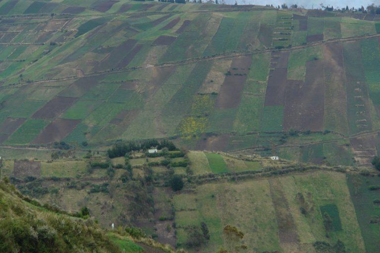 Áreas de páramo del volcán Chimborazo han sido tomadas para agricultura. Foto: Robert Hofstede.