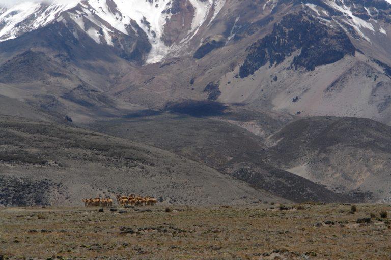 Paisaje de páramo en el volcán Chimborazo. Foto: Robert Hofstede.