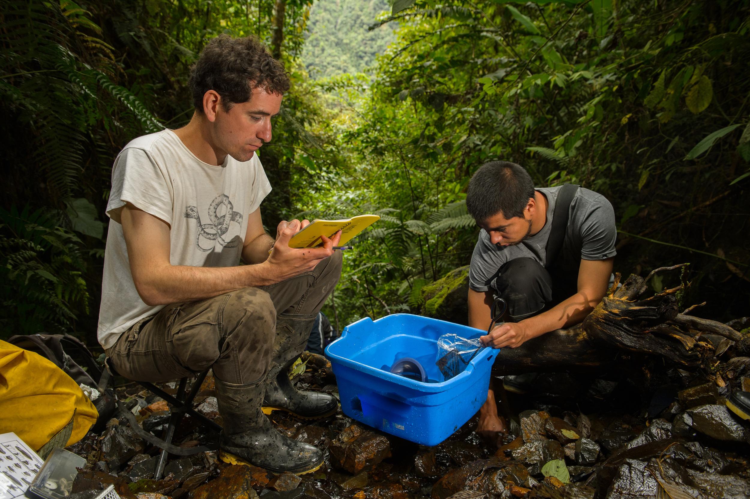 Alessandro Catenazzi investigó en el valle del Kosñipata, Reserva Nacional del Manu, en Perú. Foto: Emmanuele Biggi.