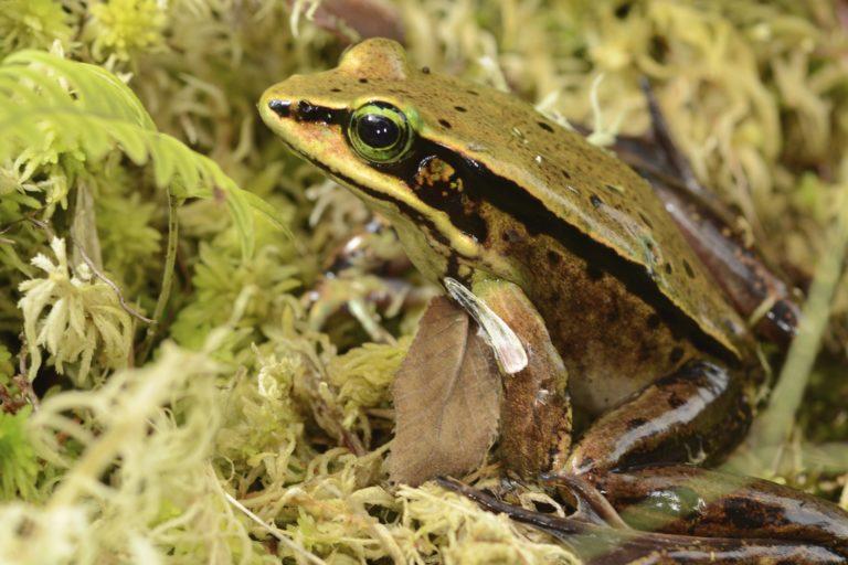 El 12% de las especies afectadas a nivel mundial han tenido alguna forma de recuperación. Foto: Alexander Shepack.