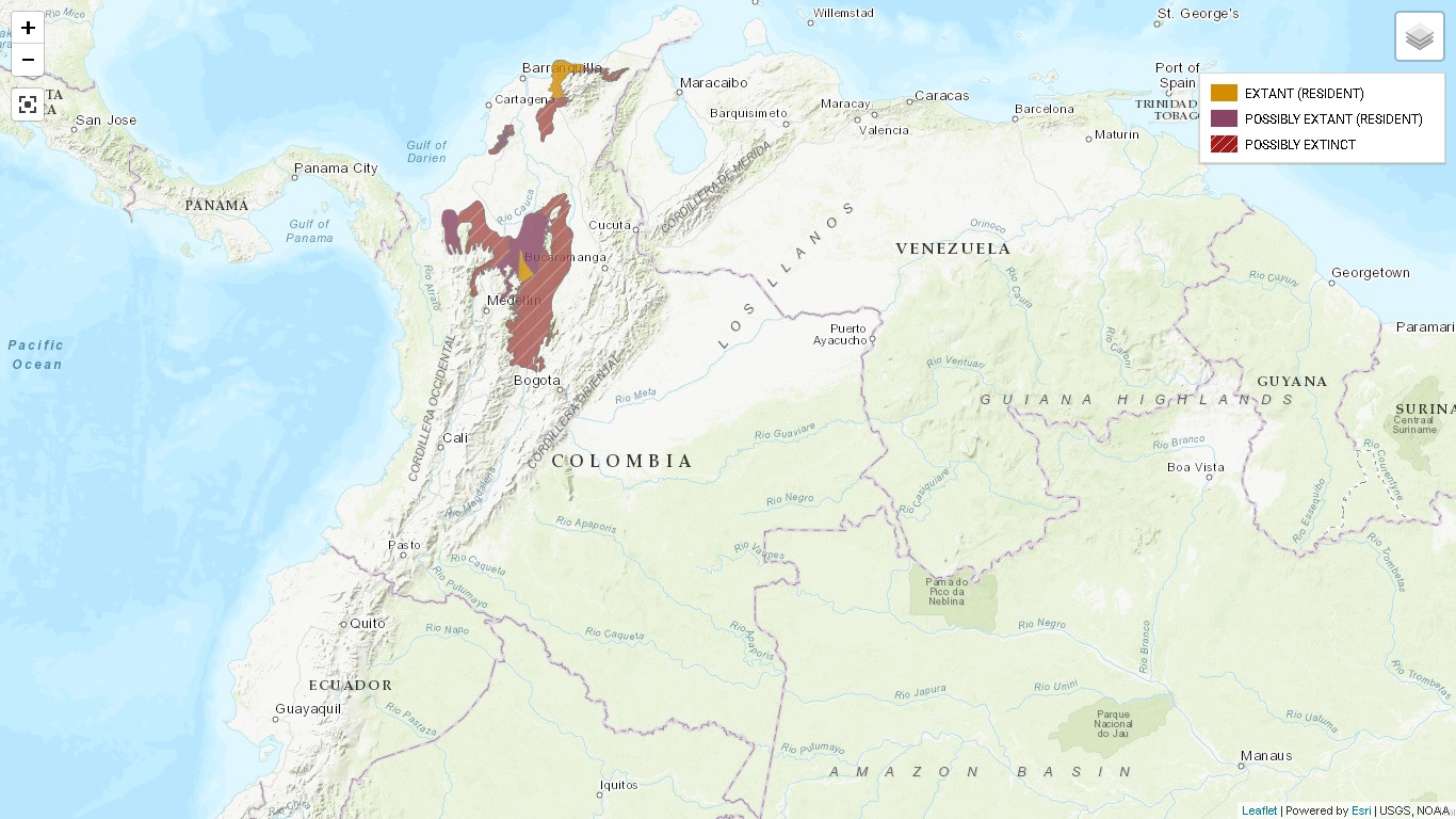 En amarillo zonas donde habita el paujil de pico. En morado las zonas donde posiblemente vive. En rojo con rayas blancas, donde posiblemente está extinto. Mapa: UICN.