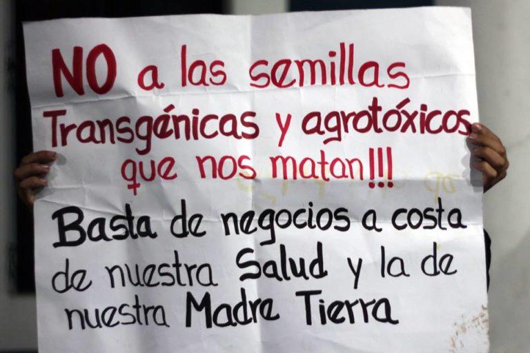 Los partidos políticos no mencionan el tema de los transgénicos en sus planes de gobierno. Foto: Probioma.