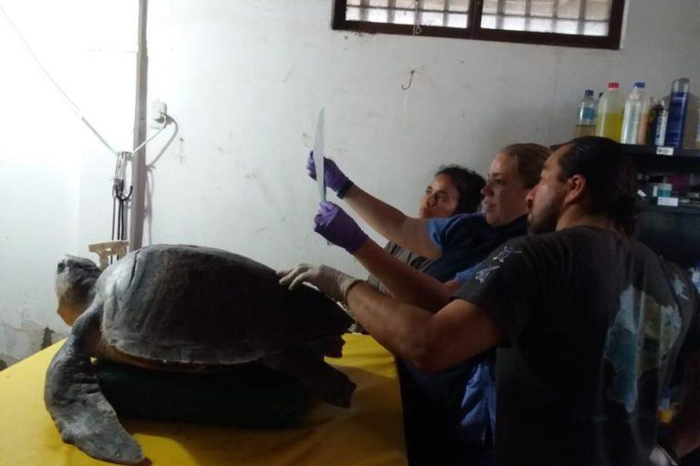 Rubén Alemásn y algunos de los voluntarios, miran los exámenes realizados a una tortuga. Foto: Centro de Rehabilitación de Fauna Marina del Parque Nacional Machalilla.