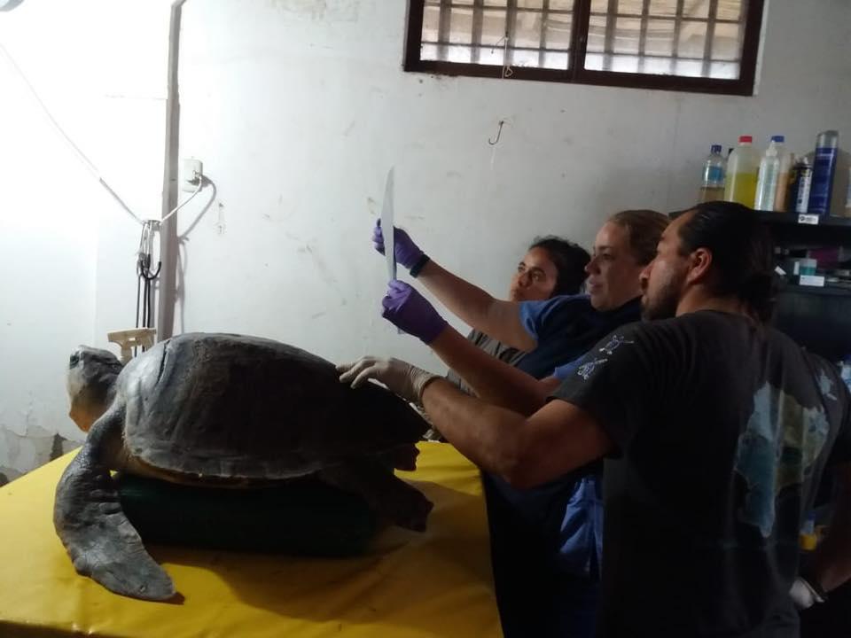 Rubén Alemán y algunos de los voluntarios, miran los exámenes realizados a una tortuga. Foto: Centro de Rehabilitación de Fauna Marina del Parque Nacional Machalilla.