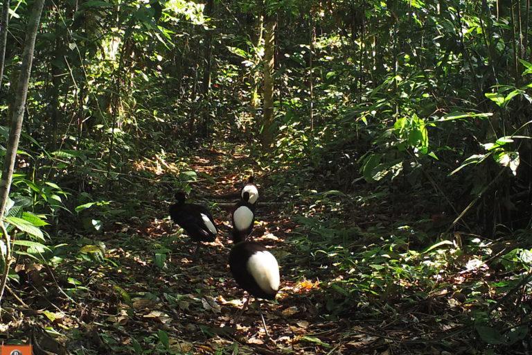 Los amigos alberga una biodiversidad de flora y fauna que supera las cuatro mil especies. FOTO: ACCA.