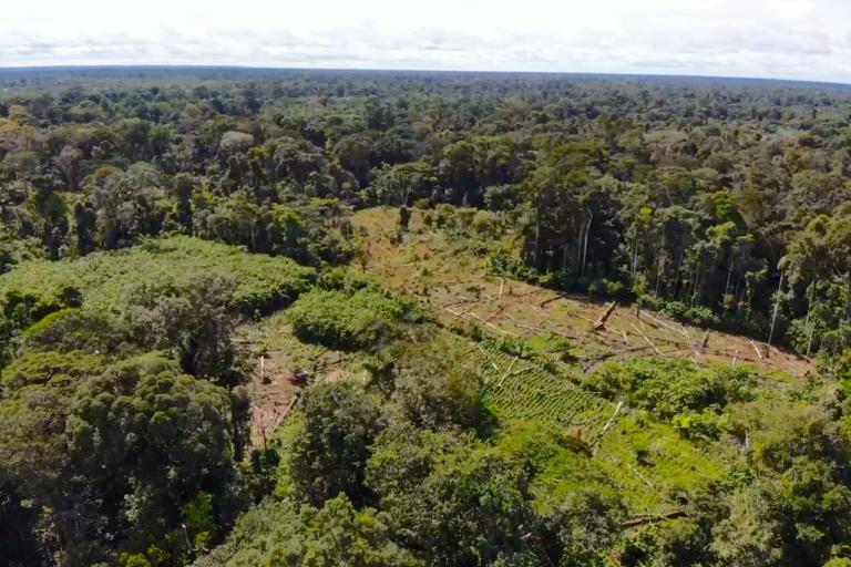 COVID 19 Las comunidades peruanas de la triple frontera enfrentan tala ilegal y narcotráfico. Ahora se suma la pandemia del coronavirus. Foto: Monitores ambientales de Buen Jardín.
