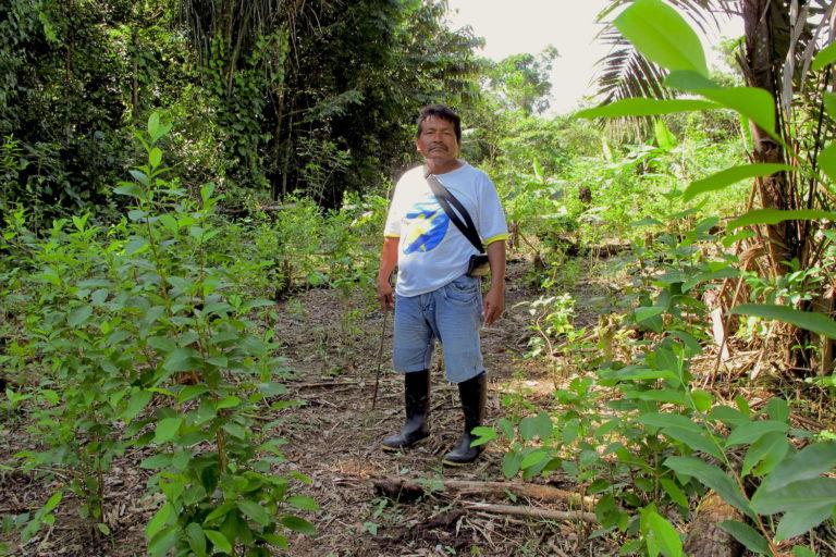 COVID 19 Los indígenas tikuna viven amenazados por los ilegales que ingresan a sus territorios. Foto: Alexa Vélez.
