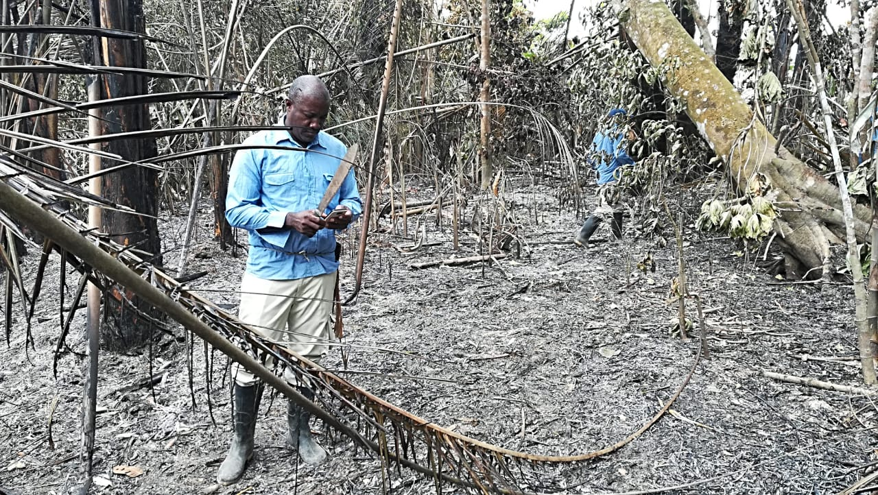 El incendio en el Parque Nacional Los Katíos dejó 1788 hectáreas quemadas al 2 de abril de 2019. Foto: Parques Nacionales Naturales de Colombia.