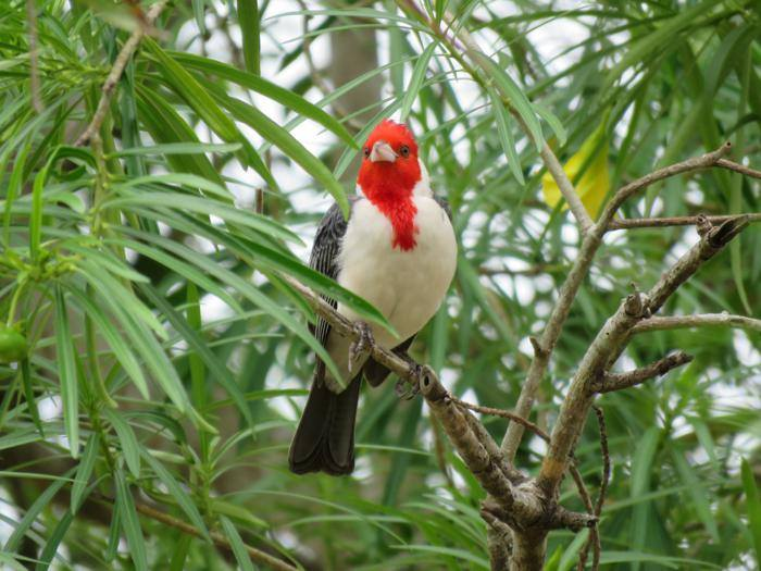 Con más de 1400 especies de aves, Bolivia se preparar para estar en el top 5 del ranking mundial. Foto: Vincent Vos.