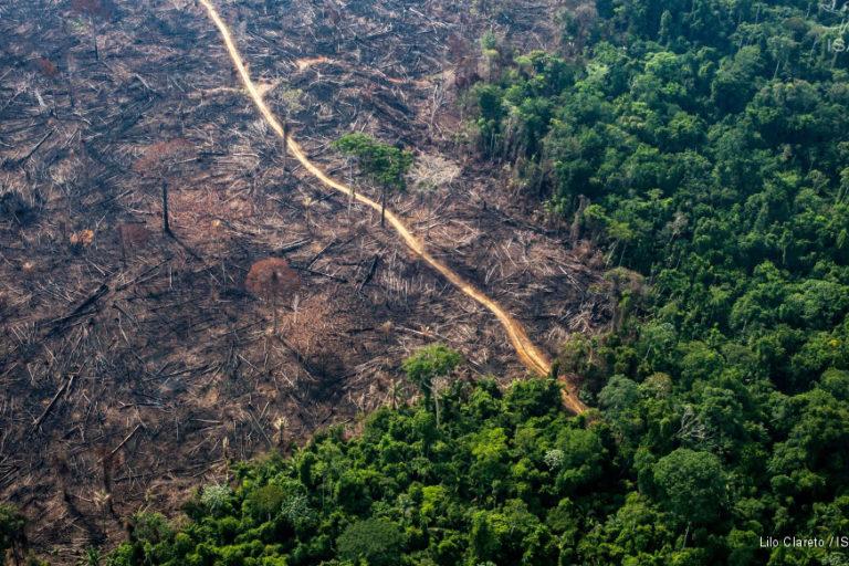 Dos millones de hectáreas se perdieron en el 2018 en la Amazonía. Foto: Lilo Clareto / ISA.