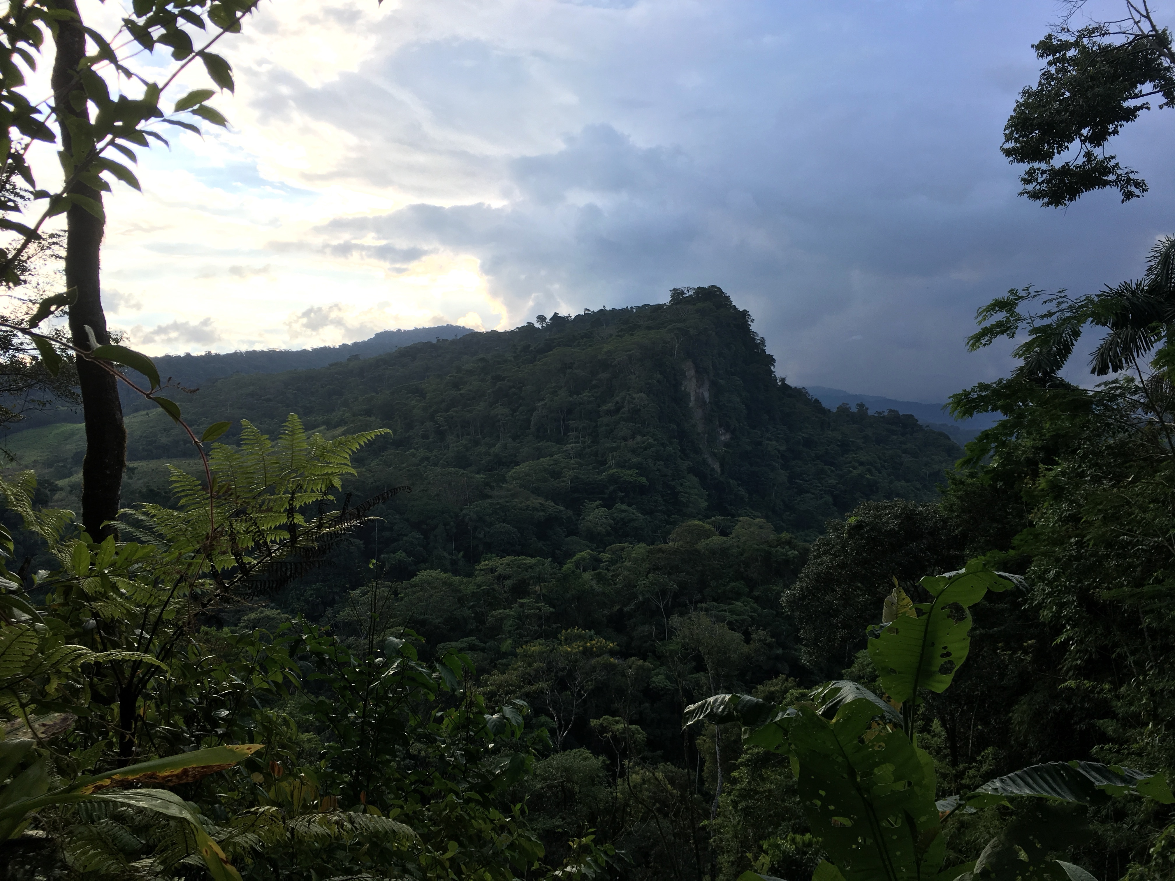 Reserva Isla Escondida, en el Putumayo, el lugar al que viajará Diego Calderón para buscar al paujil nocturno. Foto: Diego Calderón.