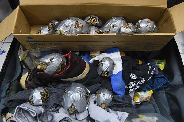 Más de 1500 tortugas fueron encontradas en maletas abandonadas en el aeropuerto internacional de Manila. Imagen cortesía de la Oficina de Aduanas de NAIA