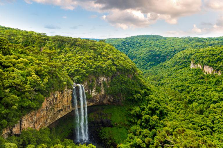Los bosques tropicales son los más afectados por los cambios en el planeta. Foto: IPBES.