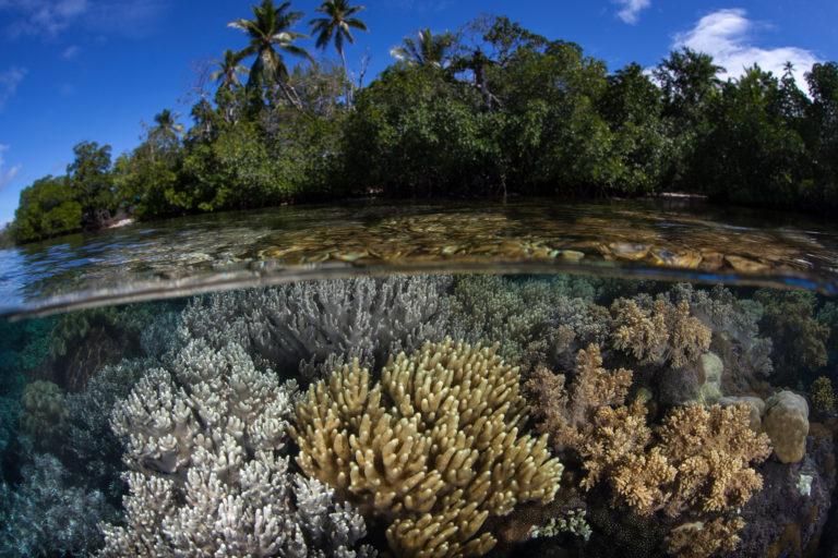 El 50% de los arrecifes de coral se perdieron en los últimos 50 años. Foto: IPBES.