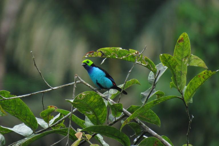 Por tercer año consecutivo Colombia logró el primer puesto en la competencia mundial de avistamiento de aves, con 1591 registros.