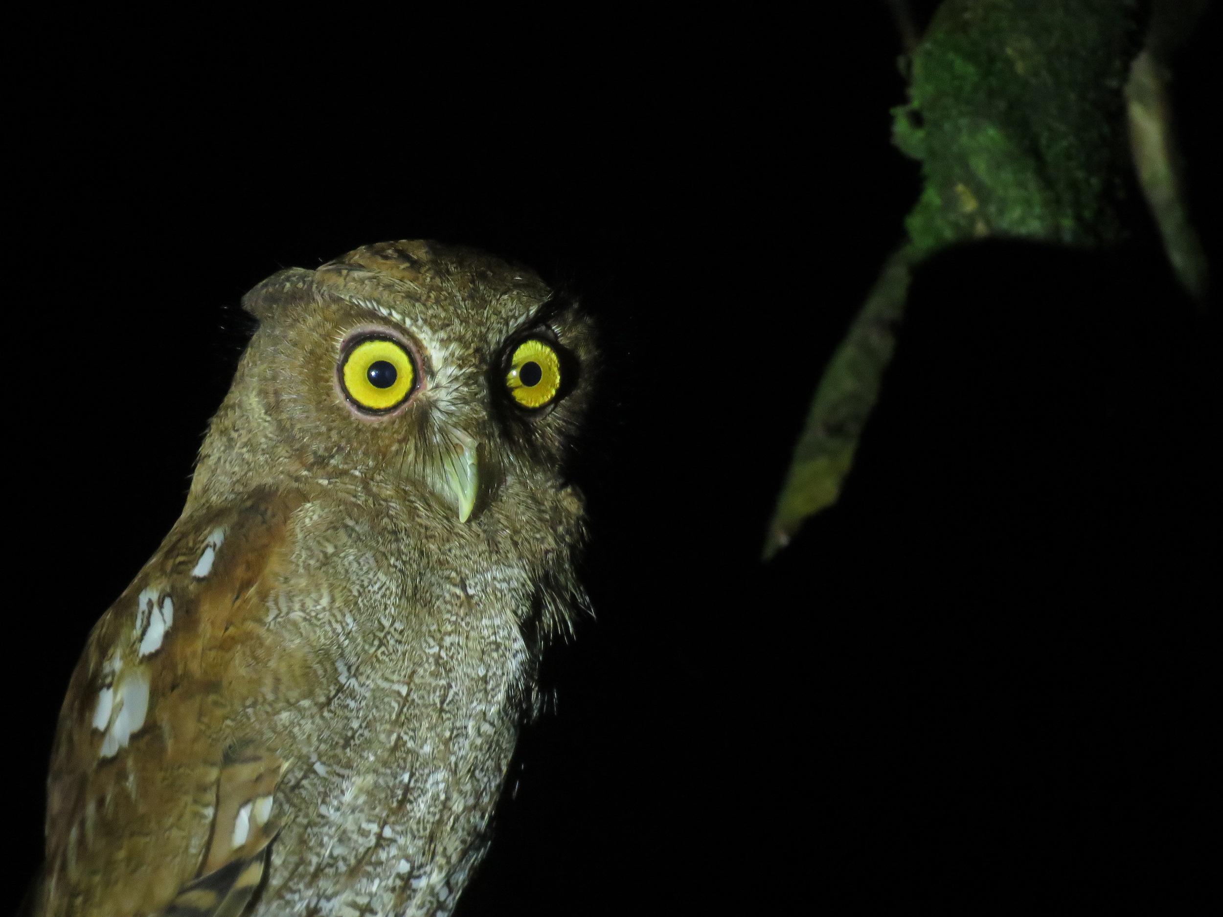 Desde el primer minuto del 4 de mayo, los colombianos salieron en busca de la avifauna del país. Foto: Iván Lau