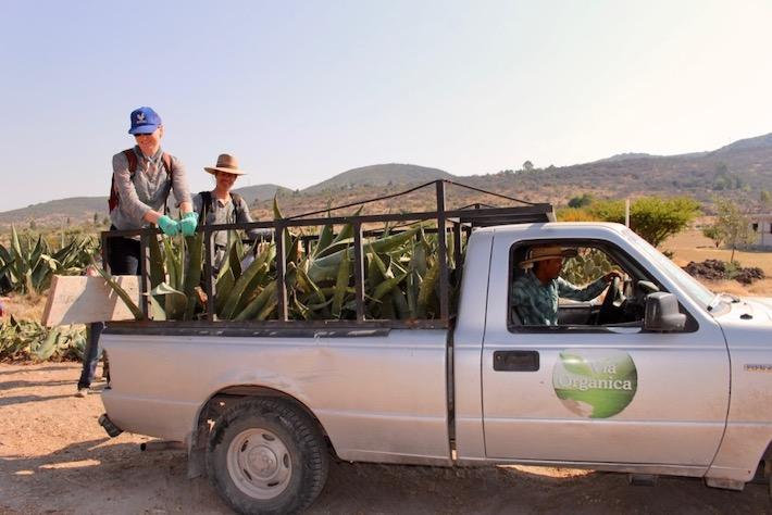 Voluntarios ayudan a llevar una carga de agaves a la milpa de Don Manuel, donde los van a sembrar. Foto: Tracy L. Barnett.
