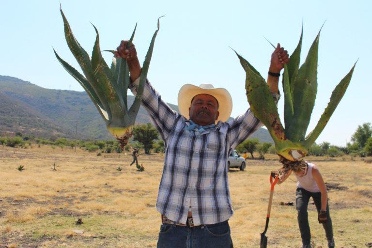 Alrededor de 200 familias campesinas de San Miguel de Allende se han beneficiado de los talleres y comienzan a aplicar lo aprendido. Hoy cuentan con nuevos espacios para vender sus productos orgánicos. Foto: Tracy L. Barnett.