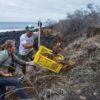 Liberación de iguanas en la isla Santiago del Archipiélago de Galápagos. Foto: Parque Nacional Galápagos.
