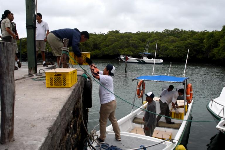 En este ambicioso proyecto de conservación participaron la Dirección del Parque Nacional Galápagos (DPNG), la Universidad Massey de Nueva Zelanda y la organización Island Conservation. Foto: Parque Nacional Galápagos.