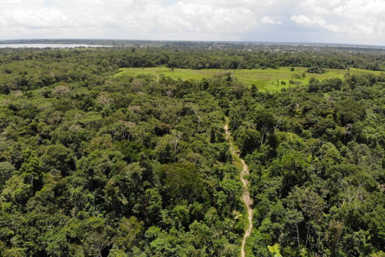 A pocos kilómetros de la Triple Frontera con Brasil y Colombia, en el extremo oriental de Loreto, se ha abierto una vía vecinal de 26 kilómetros que parte por la mitad una comunidad indígena yagua. Foto: Rainforest Foundation