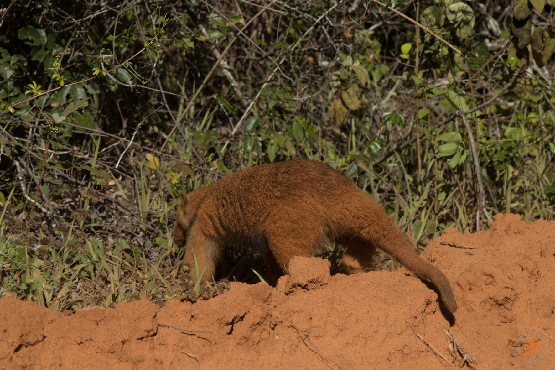 La nueva área de conservación alberga una gran cantidad de fauna silvestre. Foto: Nativa.