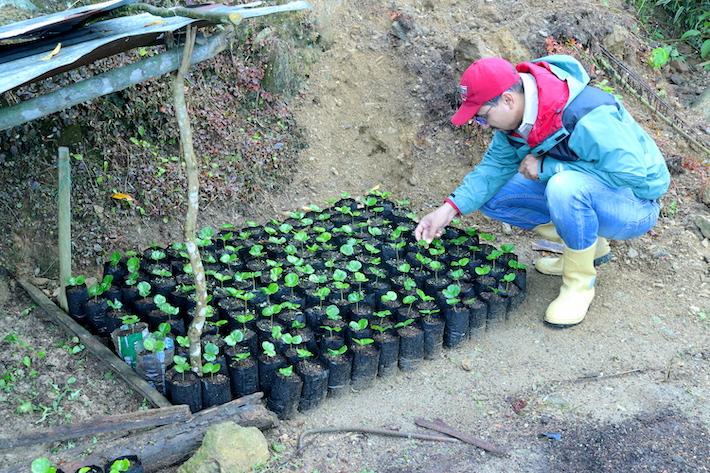 Productores han sobrepasado la producción de café y de especies forestales por su propia iniciativa. Foto: Provita.