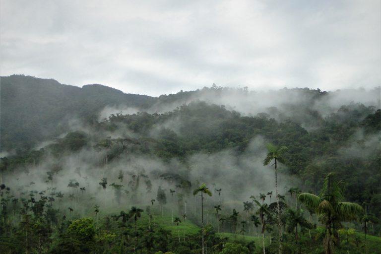 Cordillera del Cóndor. Foto: INABIO.