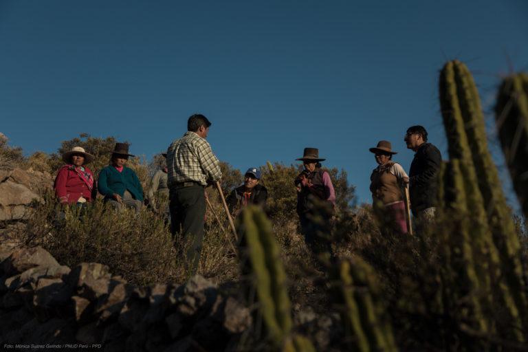 El sancayo es un fruto silvestre que crece a más de 3000 metros de altura. Foto: Mónica Suárez Galindo / PNUD Perú – PPD.