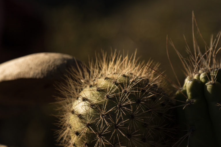Según las comunidades de Tacna, el sancayo es el fruto de la felicidad. Foto: Mónica Suárez Galindo / PNUD Perú – PPD.