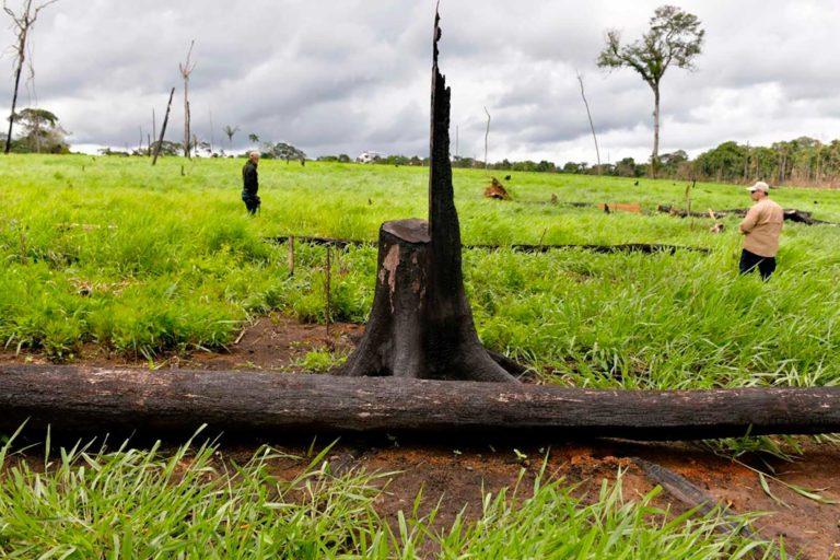 Las cifras de deforestación en Colombia bajaron en el 2019, pero se están incrementando este año. Foto: Efraín Herrera / Presidencia de Colombia.