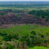 La Campaña 'Artemisa', contra la deforestación, se adelantará en todos los parques naturales del país, en desarrollo de la Política de Defensa y Seguridad, para proteger la biodiversidad. Foto: Efraín Herrera - Presidencia de Colombia.