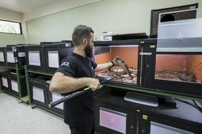 Serpentario del Instituto Clodomiro Picado. Foto: Alonso Tenorio / Imágenes en Costa Rica.