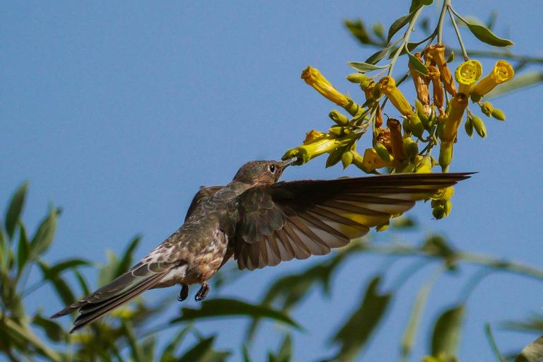 La biodiversidad en Bolivia está amenazada. Foto: Alfredo Romero.