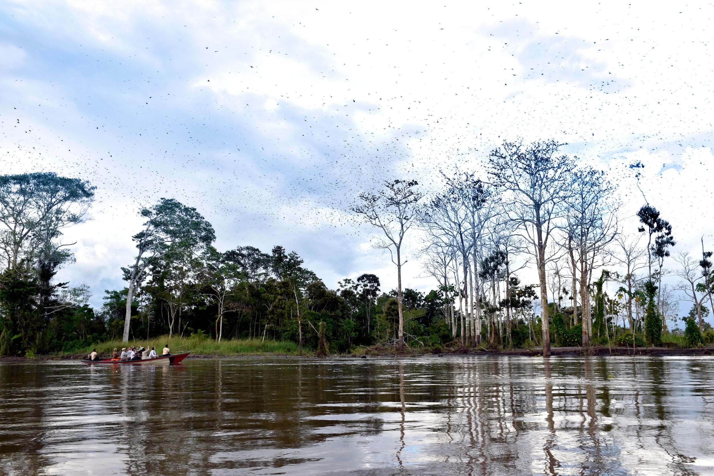 Patrimonio Natural del Perú es un nuevo mecanismo de financiamiento para lograr la sostenibilidad de 38 zonas reservadas en los próximos 10 años con una inversión de 140 millones de dólares. Foto: Jeffrey Dávila / WWF Perú