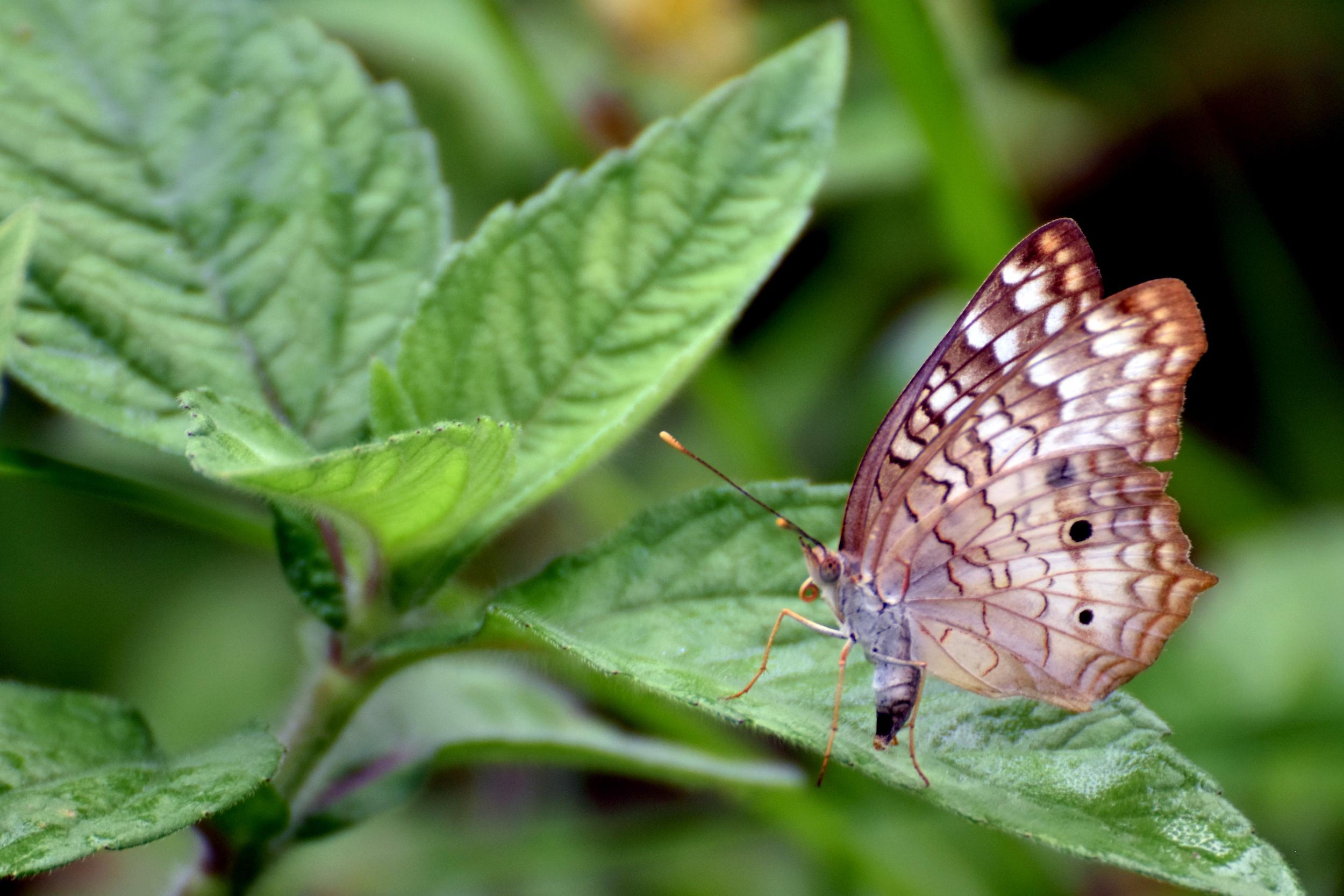 Con los fondos de Patrimonio Natural del Perú se atenderán 38 áreas protegidas de la Amazonía: Jeffrey Dávila / WWF Perú.