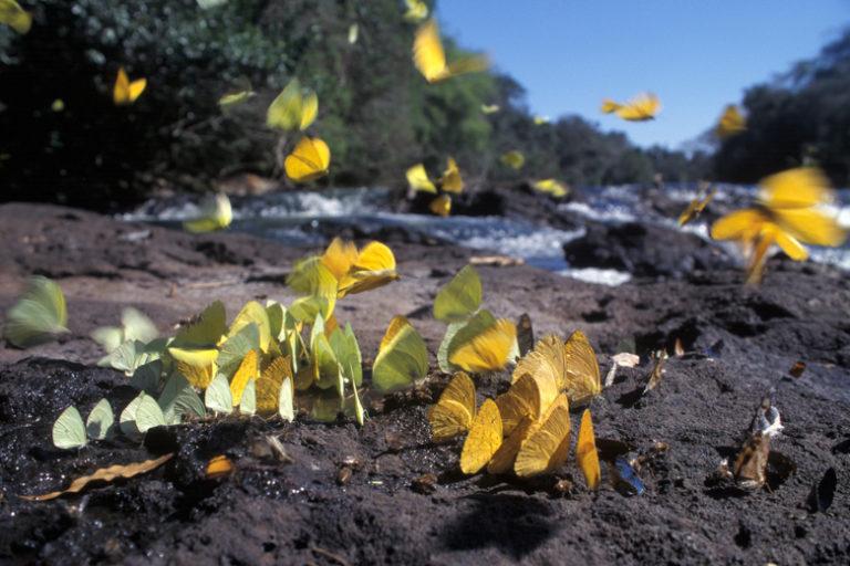 El Programa Áreas Protegidas de la Amazonía en Brasil tiene como meta llegar a 117 zonas reservadas para el 2020. Foto: ARPA Brasil.