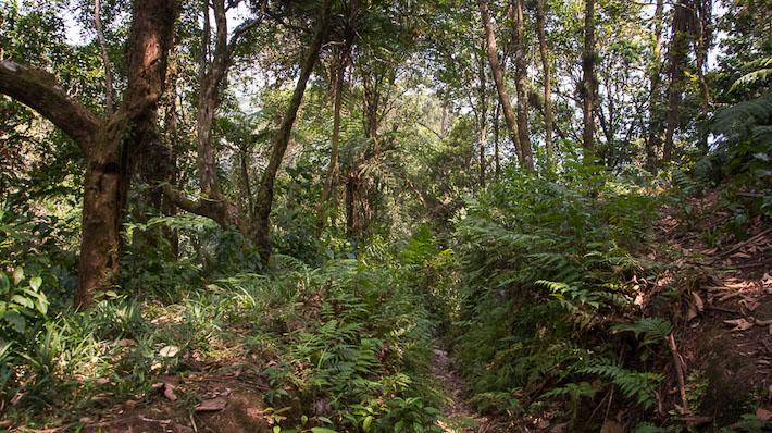El bosque mesófilo es uno de los ecosistemas más amenazados de México. Foto: Marlene Martínez.