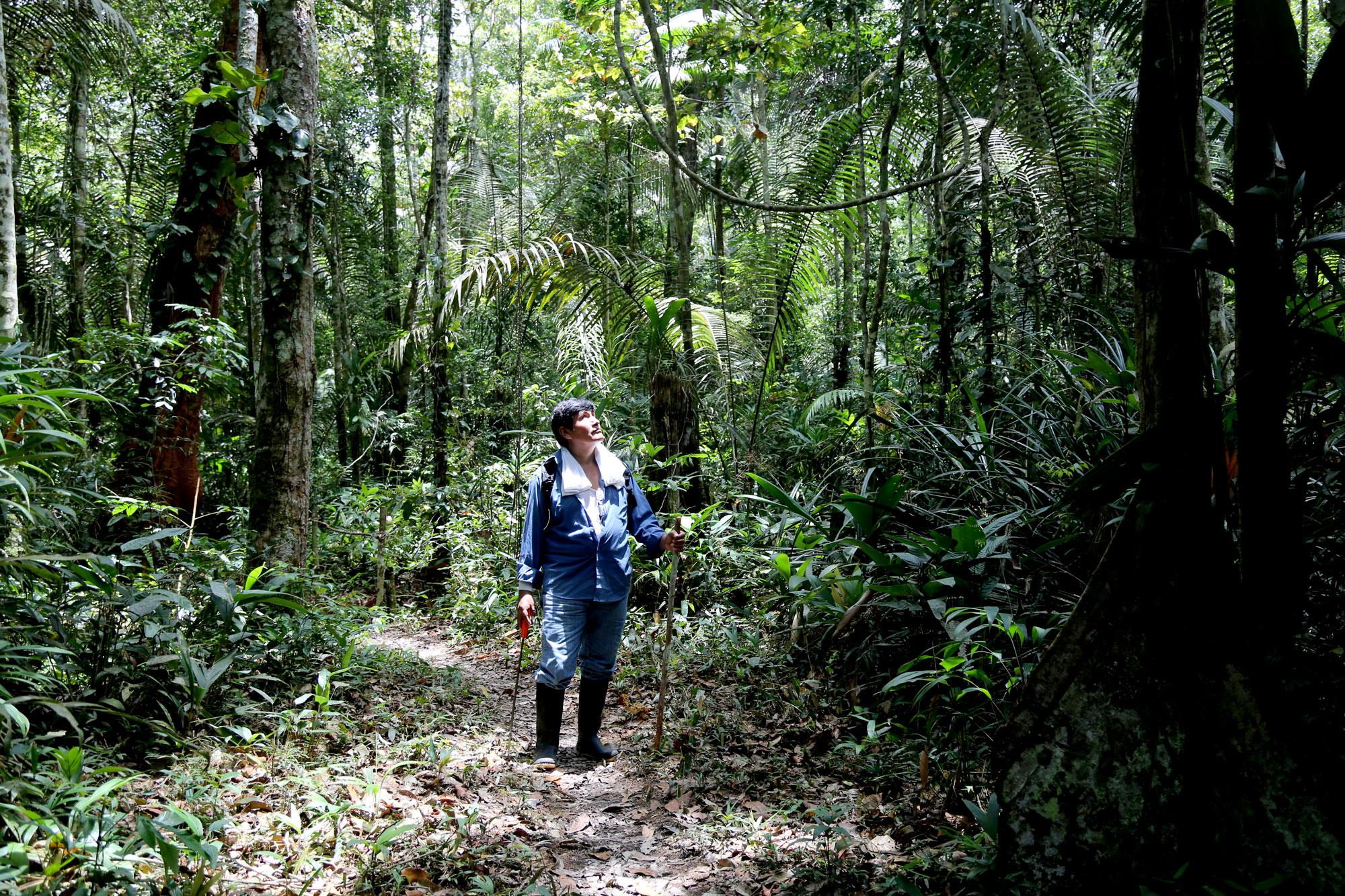 Dentro de su concesión todavía tiene un bosque primario en el que sigue reforestando y aprovechando. Es totalmente otro panorama. Foto: Diego Pérez / SPDA.