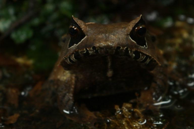 En la Balsa de los Sapos viven más de 1500 anfibios. Foto: Isabela Ponce.