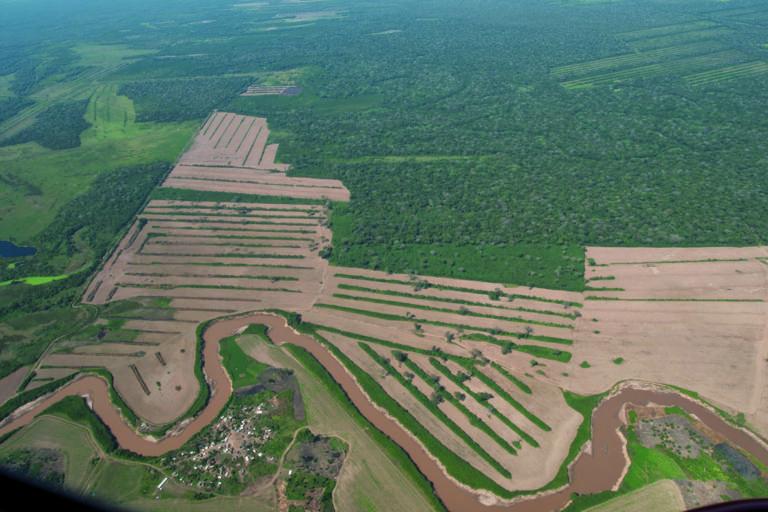 Bolivia elecciones Las normas que permiten el avance de la frontera agrícola en Bolivia es uno de los cuestionamientos en la política de Evo Morales. Foto: FAN Bolivia.
