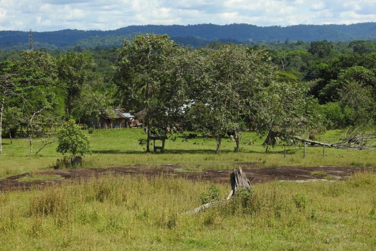 Entre el 2017 y 2018 las vías de la Amazonía colombiana aumentaron en 5832 kilómetros. Foto: GAIA Amazonas.