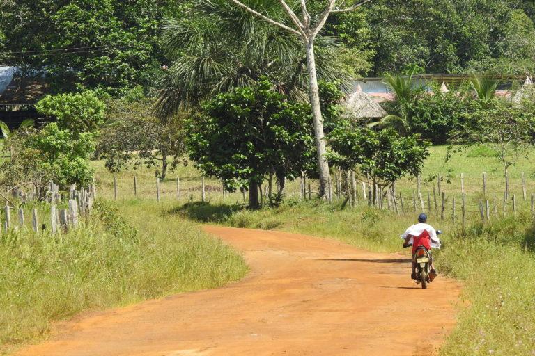 Las carreteras están arrasando con los bosques en Latinoamérica. Foto: GAiA Amazonas.