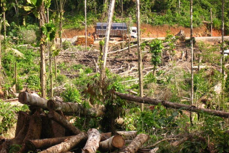 Las carreteras son el camino para el ingreso de actividades ilegales. Foto: Ecociencia.