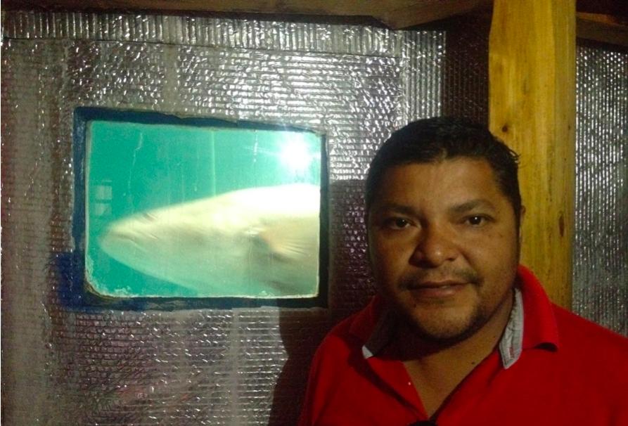 Por su gran tamaño, la Totoaba requiere estanques adaptados de mínimo 200 metros cúbicos de capacidad. Fotografía: Pablo Hernández Mares.