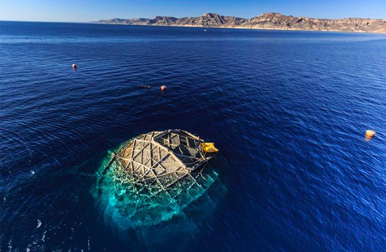 Jaulas sumergibles en las que crían mar adentro a las totoabas. Foto: earth ocean Farms.