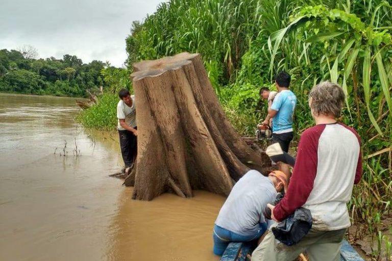 Los troncos que eran desechados ahora se rescatan para transformarlos en objetos utilitarios y decorativos. Foto: Manu 3.